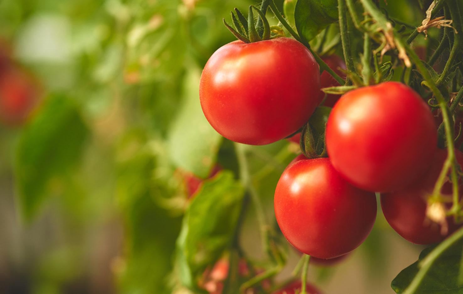 tomaten_convenience_food_wirblog_arbeitsplatz_gesundheit